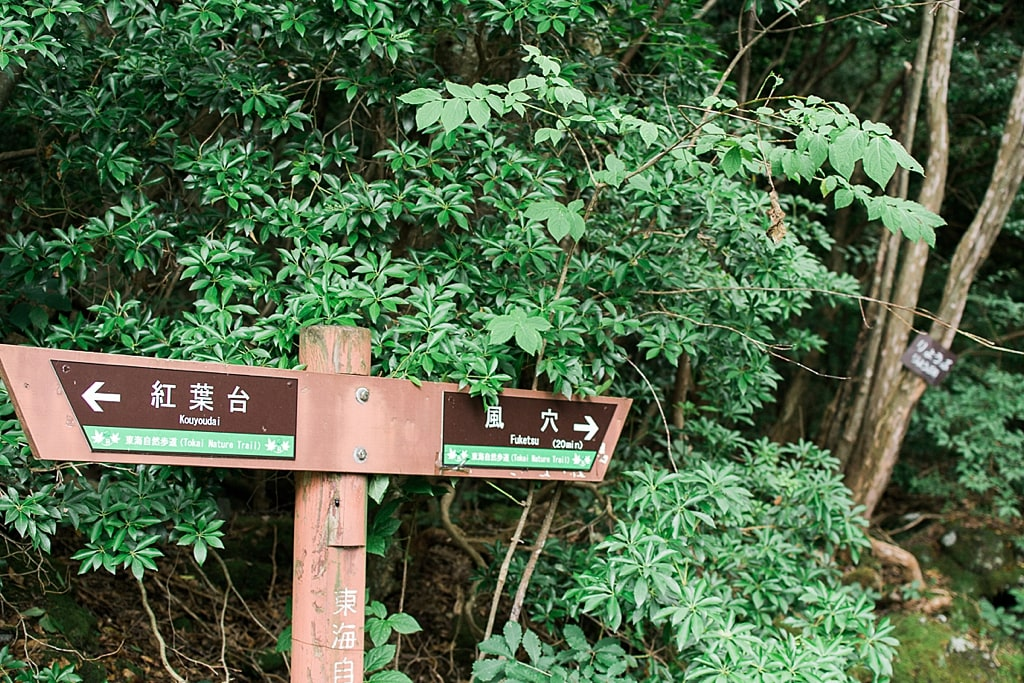 Walking in Aokigahara Forest, following direction to the Fugaku Fuketsu Wind Cave