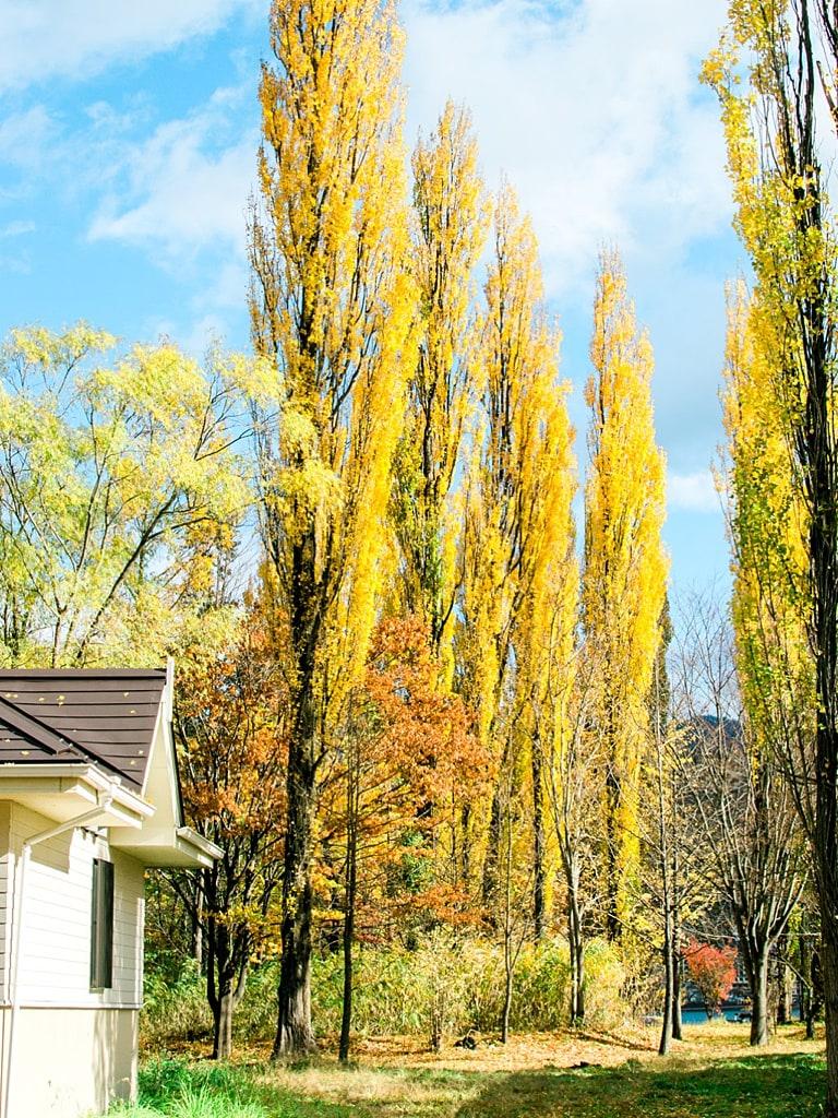 Oike Park Kawaguchiko in autumn