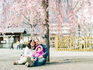 Cherry blossoms in Kofu City