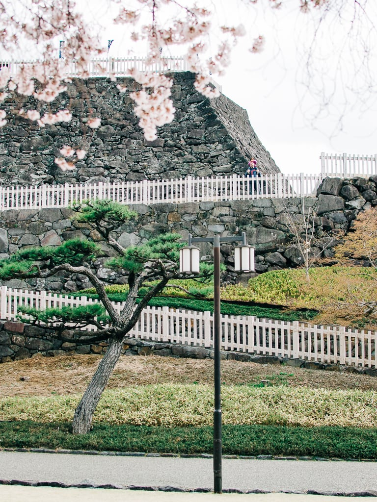 Maizuru Castle stone wall and its cherry blossoms