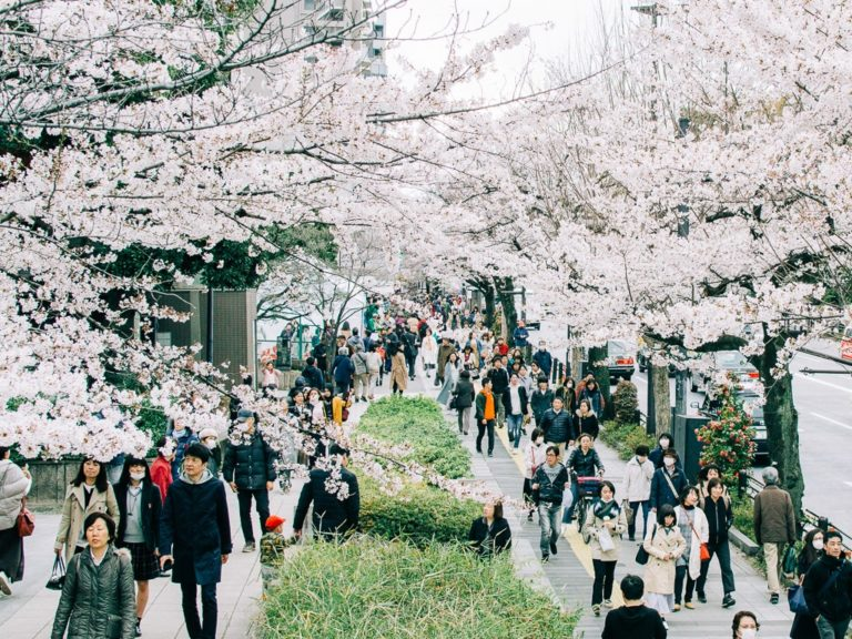Travel tips and advice before visiting Japan