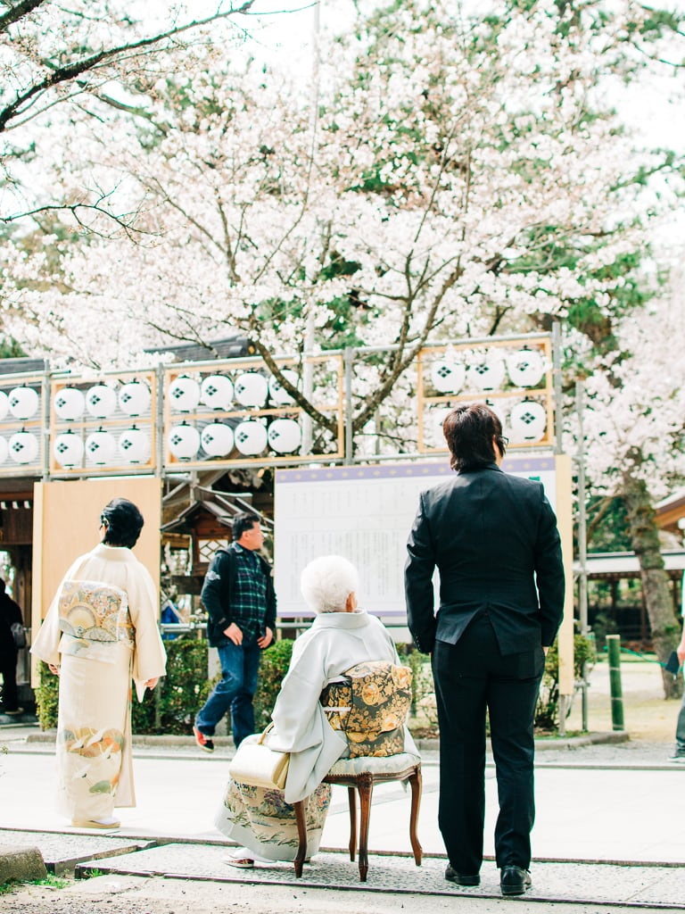 Visitors adoring cherry blossoms in takeda shrine